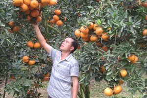 Chỉ dẫn địa lý cho nông sản Việt: Cần thêm cơ chế