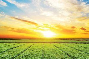Xu hướng ESG cần theo dõi: Chất lượng quản trị được đề cao