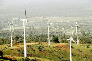 Điện gió làm mất cân bằng hệ sinh thái ?