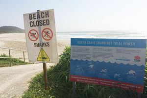 Thoát khỏi hàm cá mập nhờ ván lướt sóng