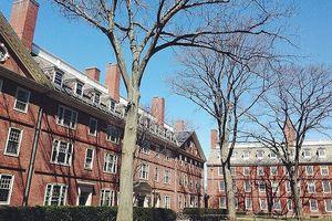 Sinh viên Harvard phản đối việc chặt cây sồi cổ trong sân trường