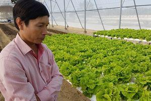 'Lão khùng' kỹ sư xây dựng rẽ ngang, khởi nghiệp trồng rau sạch