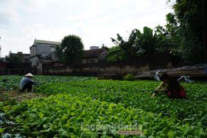 Huyện Thường Tín: Thu nhập của lao động nông thôn dần được cải thiện