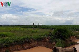Nạn mất rừng ở Tây Nguyên: Nghịch lý cho thuê rừng