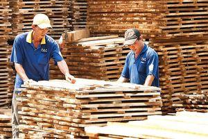 Công nghiệp Cao su Việt Nam (GVR): Lợi nhuận quý III giảm mạnh