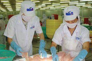 Thủy sản Hùng Vương (HVG): Lãi lớn, nhưng chưa hết lo