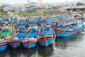 Khắc phục ô nhiễm môi trường tại cảng cá Thọ Quang
