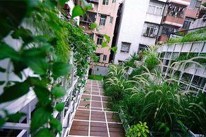 Xem cách Thâm Quyến phủ xanh thành phố chật hẹp