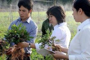 'Đột nhập vương quốc' sâm tiền tỷ của nông dân chân đất Hà Văn Đại