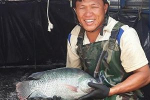 Nuôi 3ha ao cá, cấp mối cho các hồ câu, thu nửa tỷ đồng mỗi năm