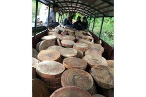 Bắt đối tượng vận chuyển 832 thớt nghiến vượt sông Đà