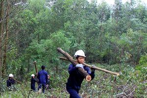 Mở đường cho gỗ Việt