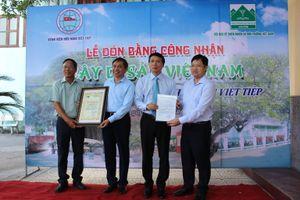 Hải Phòng: Vinh danh hai cây Di sản Việt Nam