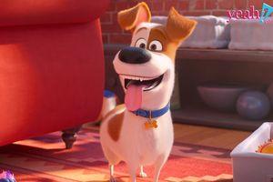 Trailer đầu tiên của 'Đẳng cấp thú cưng 2' hé lộ tình huống khiến chú chó Max 'dở khóc dở cười'