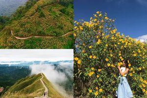 3 địa điểm hút khách cuối tuần này: Bình Liêu trắng trời hoa lau, Đà Lạt vào mùa cỏ hồng lưu luyến