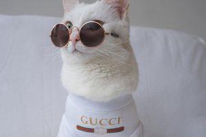 'Sang chấn tâm lý' vì mẹ lấy áo Gucci 7 triệu mang lót ổ cho mèo nằm rồi tỉnh bơ đưa hẳn 100k bảo ra chợ mua được 3 cái như thế