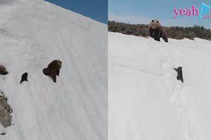 Sự thật đau lòng đằng sau đoạn clip truyền cảm hứng 'Gấu con kiên trì leo lên vách núi tuyết dựng đứng'