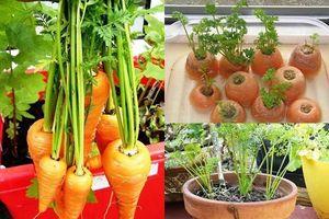 Cách trồng cà rốt cực đơn giản tại nhà giúp chị em thu hoạch mỏi tay không hết, tha hồ ép lấy nước uống đẹp da