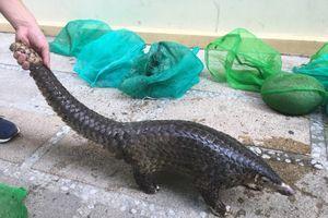 Bắt giam kẻ mua bán động vật hoang dã quý hiếm ở Quảng Nam