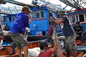 Gỡ 'thẻ vàng' cho XK thủy sản: Cần xây dựng nghề cá có trách nhiệm