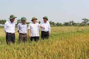 Hương đất Triệu Phong