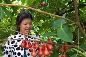 Mận đẹp 'không dấu vết' xuất bán Trung Quốc được trả giá cao vút
