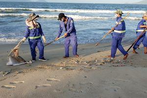 Đà Nẵng: Cá chết hàng loạt dạt vào bờ biển Nguyễn Tất Thành
