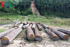 Tham nhũng trong bảo vệ rừng: Sai quá lâu nên mặc định là đúng