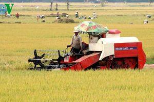 Tái cơ cấu nông nghiệp: Biến nguy cơ thành cơ hội
