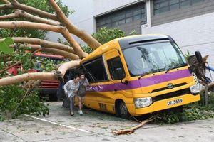 'Vết sẹo' Mangkhut: Hong Kong phải trồng lại 54.000 cây bị quật ngã
