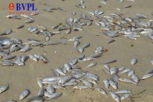 Biển Đà Nẵng cá chết hàng loạt có thể do nổ mìn đánh cá