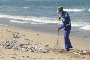 Đà Nẵng: Vẫn chưa rõ nguyên nhân cá chết hàng loạt, dạt vào bờ biển