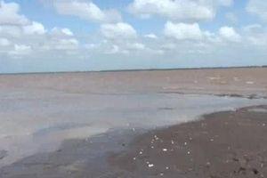 Trà Vinh: Nghêu chết trắng bãi, gây thiệt hại nặng nề