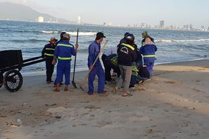 Truy tìm nguyên nhân cá chết dạt vào bờ biển Đà Nẵng