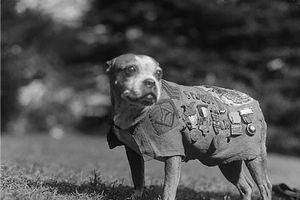 Những chiến khuyển anh hùng trong Thế chiến I