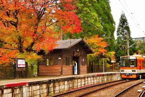 Những chuyến tàu mang mùa thu cổ tích về Nhật Bản