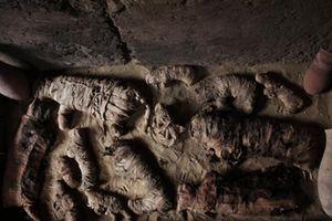 Kỳ lạ loạt xác ướp mèo niên đại 4.500 năm quý hiếm