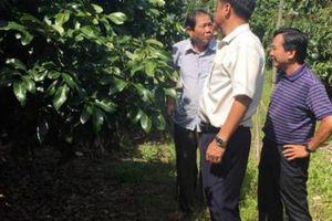 Bí quyết 'bắt' đất nghèo nuôi cây ra nhiều quả để nông dân giàu