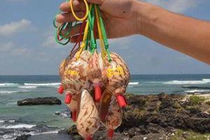 Nhặt thứ hôi hám, lăn lóc ở bãi biển mang đi làm đẹp bán cho du khách