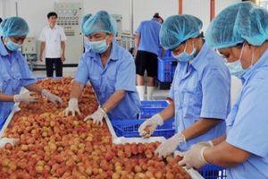 5 năm tái cơ cấu nông nghiệp: Doanh nghiệp là động lực chính
