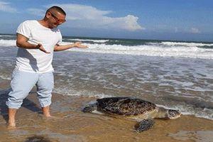 Đau xót chứng kiến rùa biển chết nghi do mắc bẫy khi vào bờ đẻ