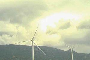 Điện gió làm mất cân bằng hệ sinh thái