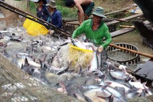 BẢN TIN TÀI CHÍNH-KINH DOANH: Nông dân phấn khởi vì giá cá tra 'lên đỉnh', doanh nghiệp địa ốc gặp khó