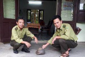 Thừa Thiên Huế: Thả một cá thể tê tê đực nặng 2kg về môi trường tự nhiên