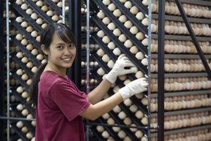 An toàn thực phẩm trong doanh nghiệp: đầu tư hay chi phí?