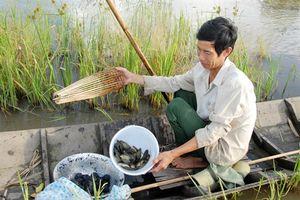 Hình ảnh độc đáo về nghề đặt xà di bắt cá rô đồng ở miền Tây