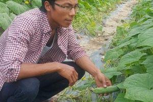Ninh Bình: Kỹ sư thủy lợi bỏ lương cao về quê làm...'địa chủ'