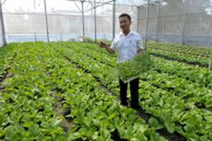 Tây Ninh đẩy mạnh tái cơ cấu và phát triển nông nghiệp theo hướng hiện đại