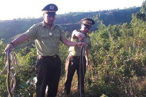 Nhóm đối tượng bỏ lại 150 con rắn bên đường rồi tháo chạy