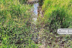 Ruộng khát khô bên công trình thủy lợi gần 12 tỷ đồng